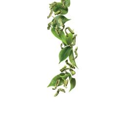Zaļās tējas sīrups 1L